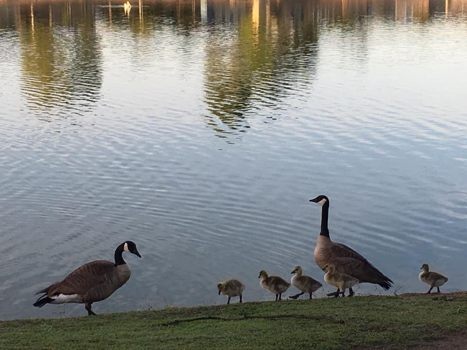 Ducks on a shoreline