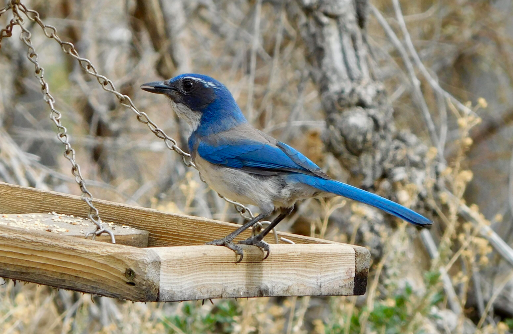 A blue bird sits on a branch.
