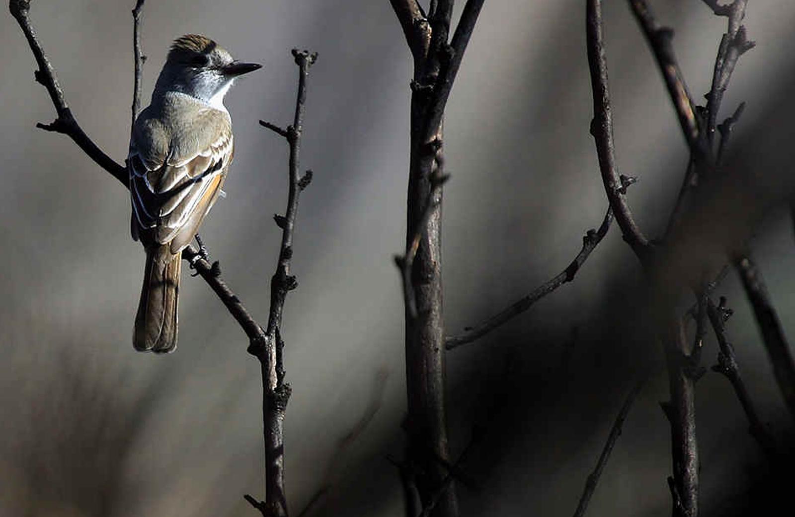 Bird sits on a tree branch at Big Morongo,