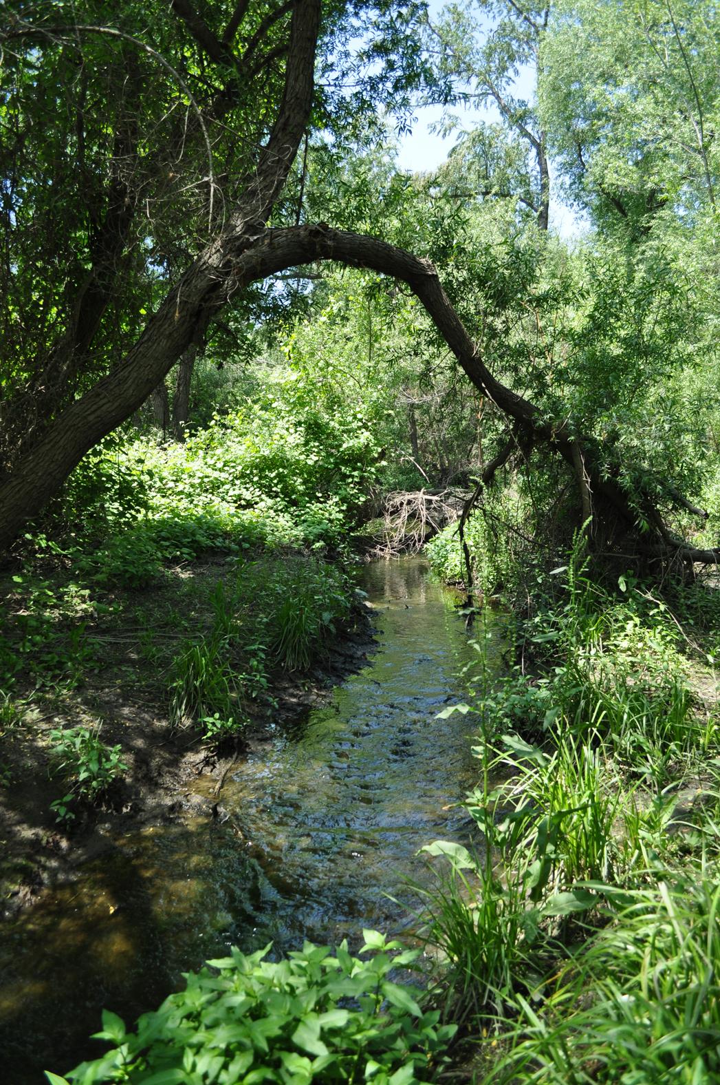 stream flowing through a green field