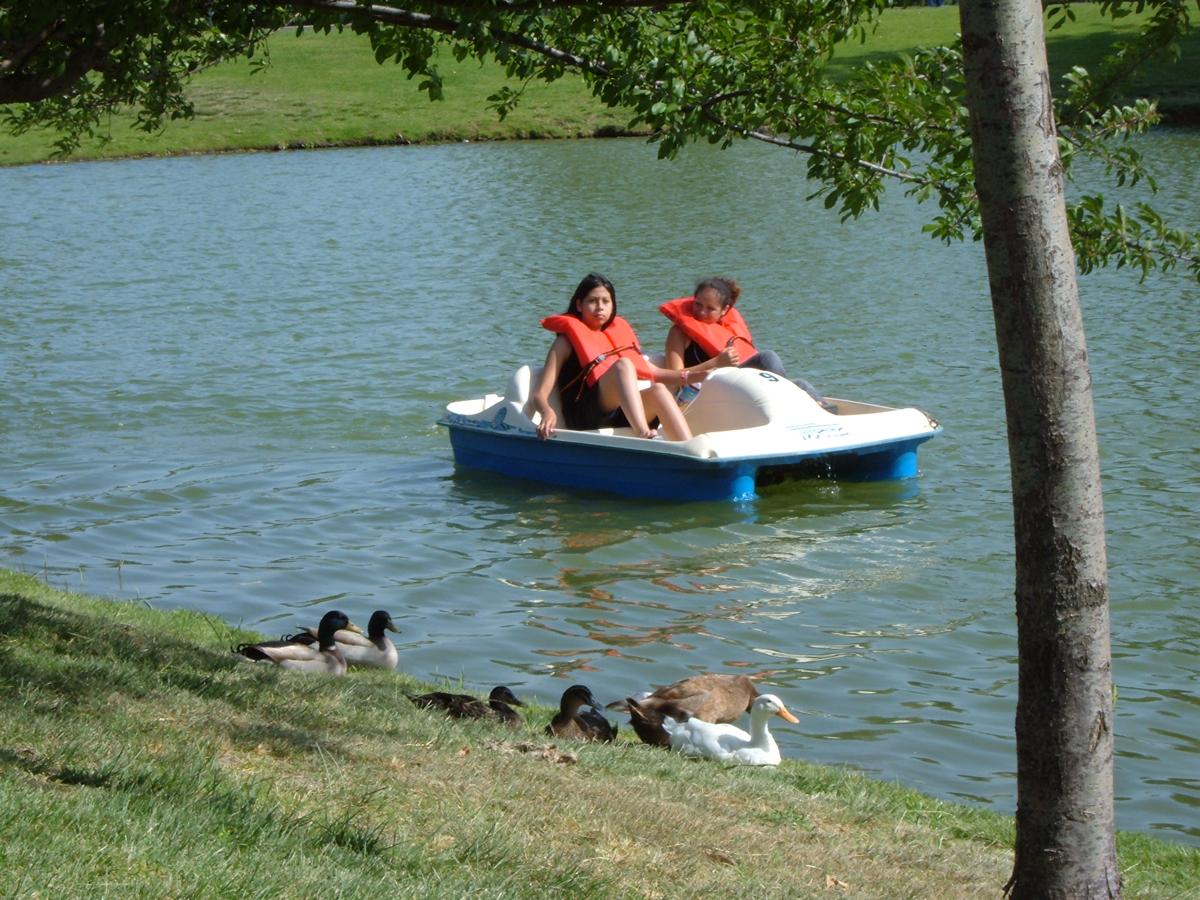 Pedal boat on Guasti Lake