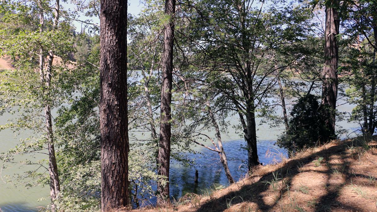 Lake through a tree line