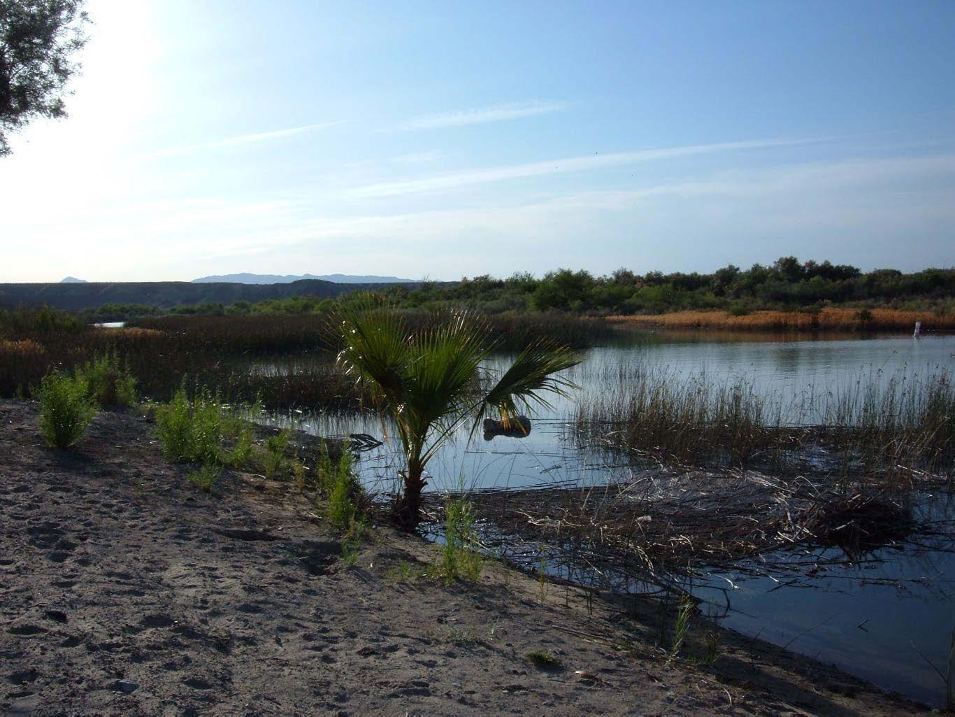 Moabi shoreline