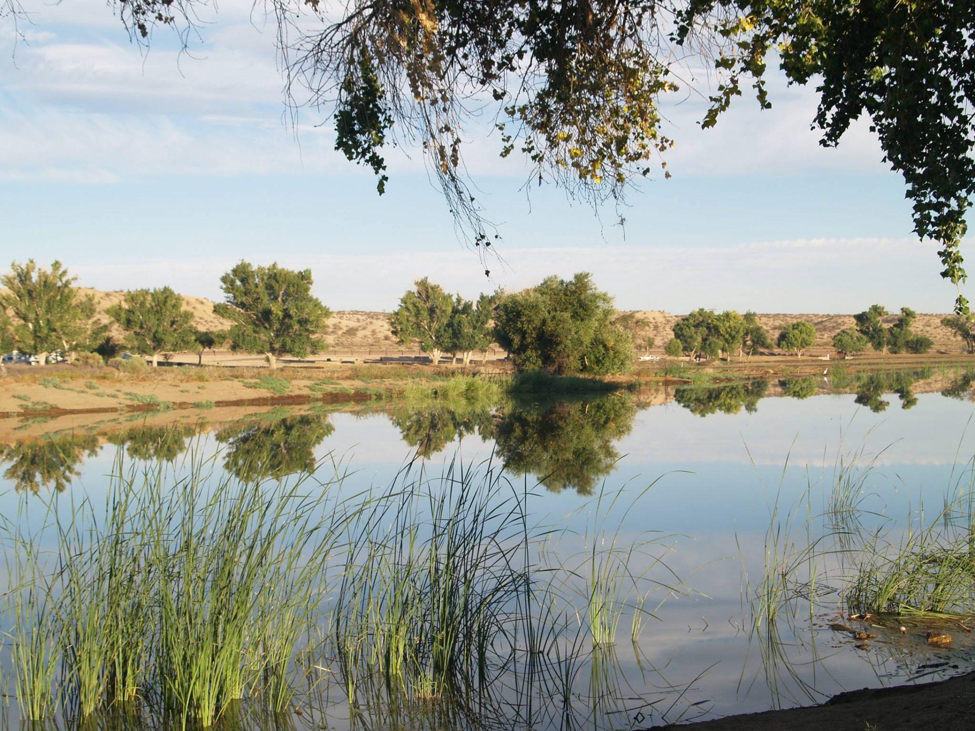 lake at Mojave Narrows
