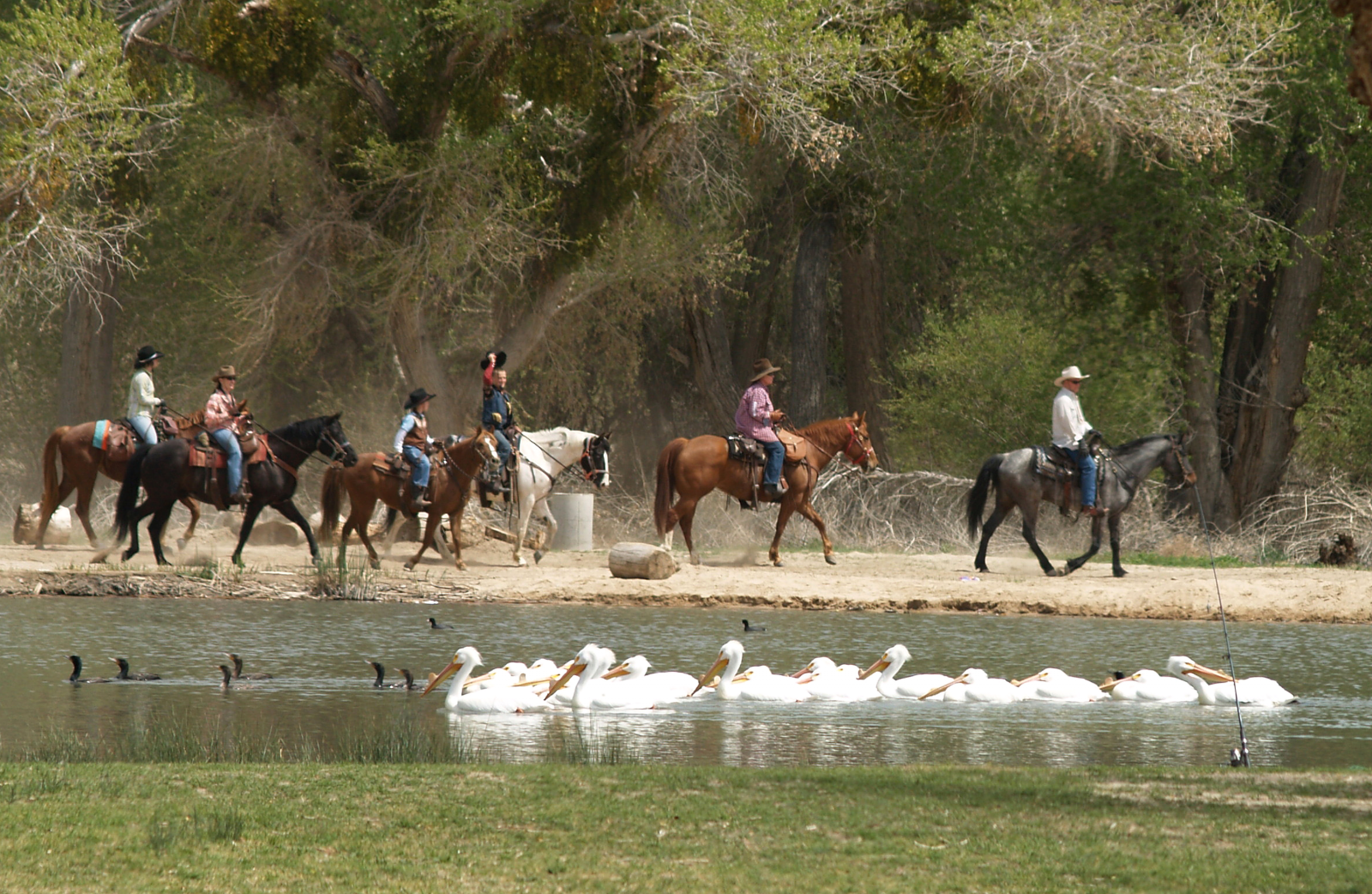 Riders are seen on horseback along the lake with ducks.