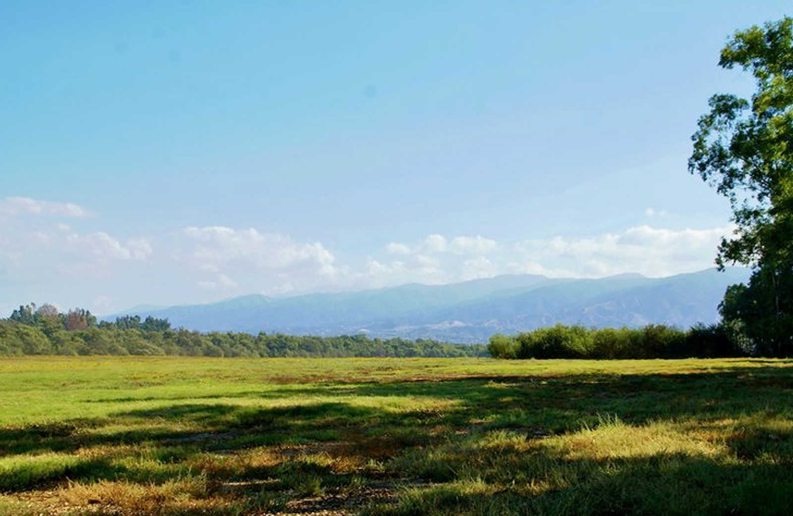 The Prado dog park field with grass and trees.