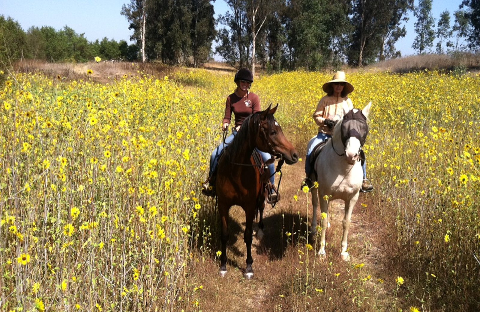 Two women ride on horseback in a field of yellow flowers at Prado park.