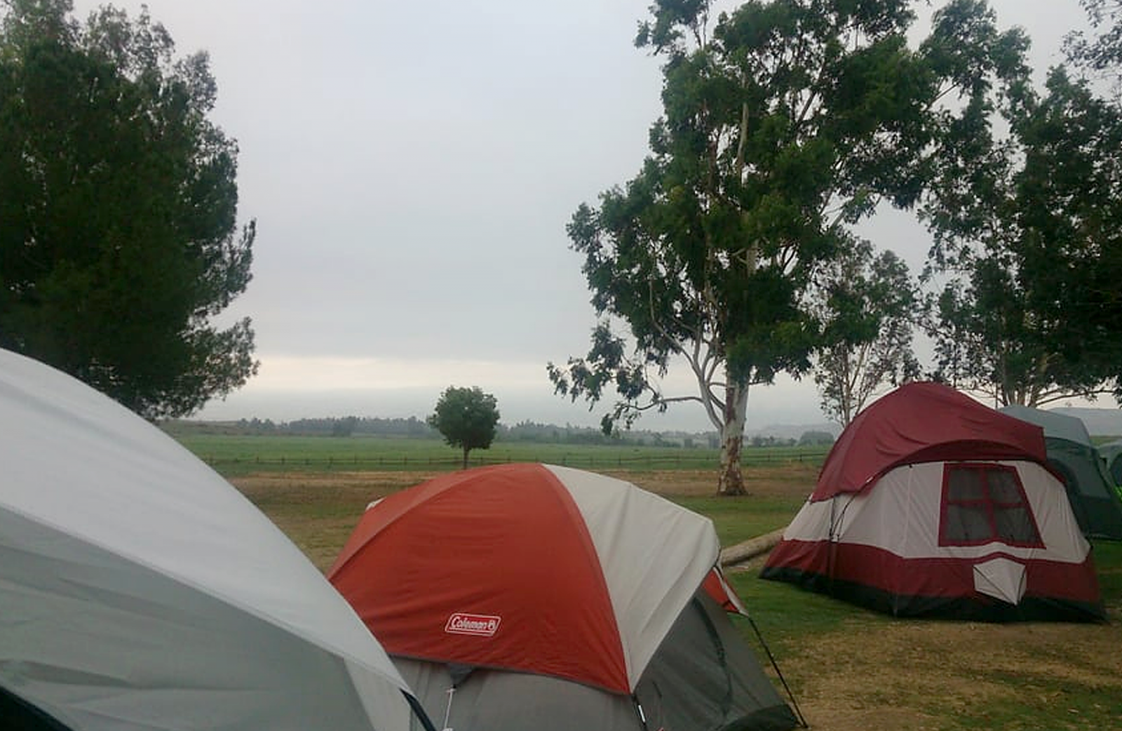 Several tents lined up on the grass at Prado park.