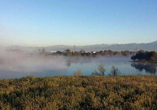 Prado lake with a low fog bank over it.