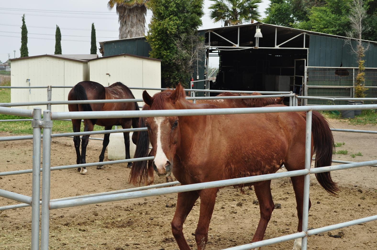 Prado Horses in stables