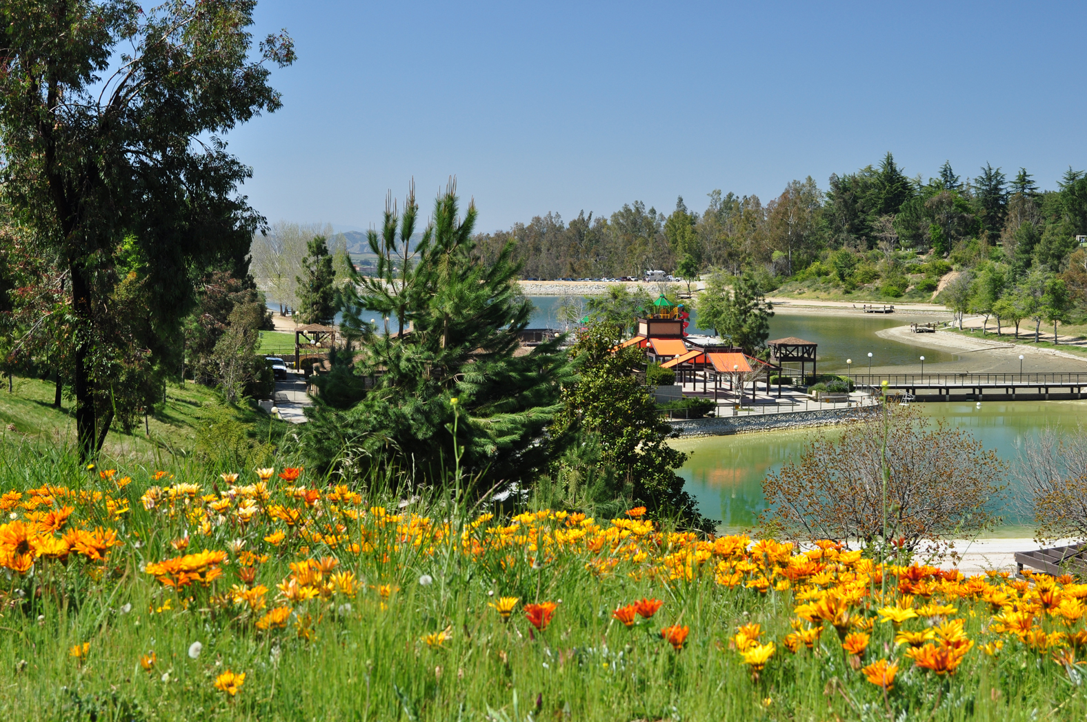 Flowers on hillside over looking lake