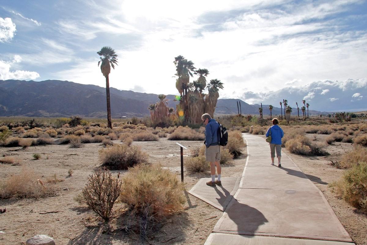 Joshua trees hiking path