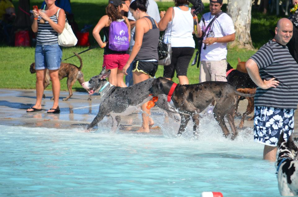 Dogs playing in water 2