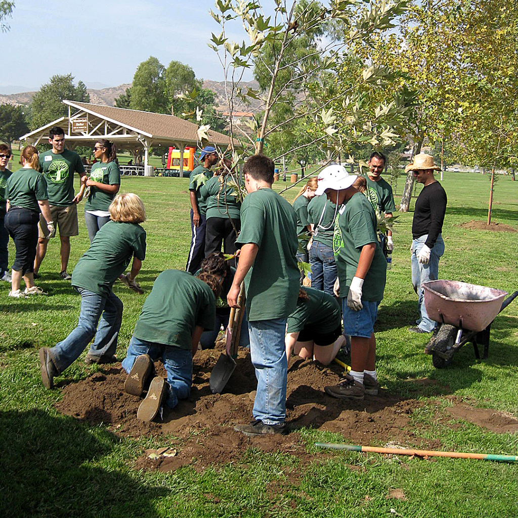 Student volunteers group planting trees in the park.